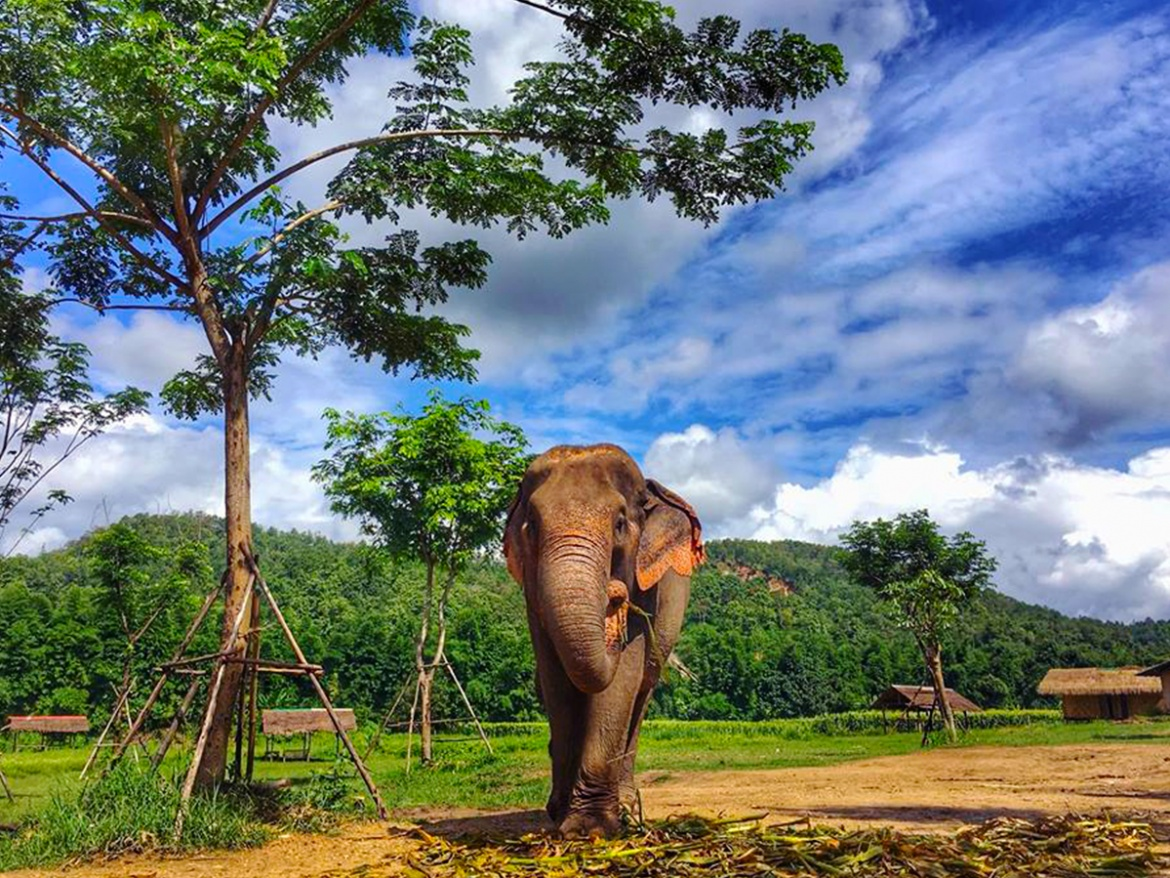 ONE DAY ETHICAL LANNA KINGDOM ELEPHANT SANCTUARY ( CRUELTY- FREE & NO RIDING )